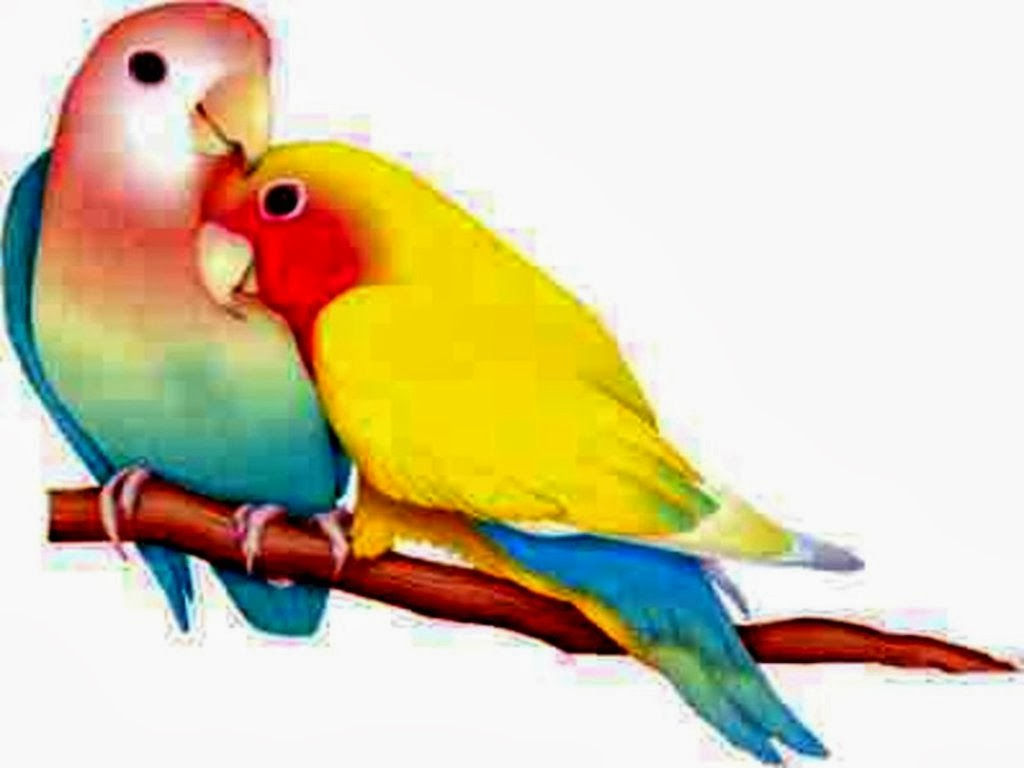 Couple Love Birds Wallpaper HD  HD wallpaper