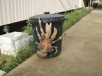 Crabe Cocotier poubelle