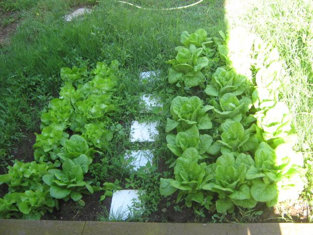 Piante da giardino ombra idee per interni e mobili - Giardino in ombra ...