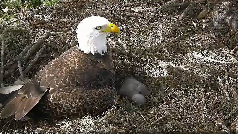 Eagles and Nature with chris7: Northeast Florida Eagles Day 7&9 ...