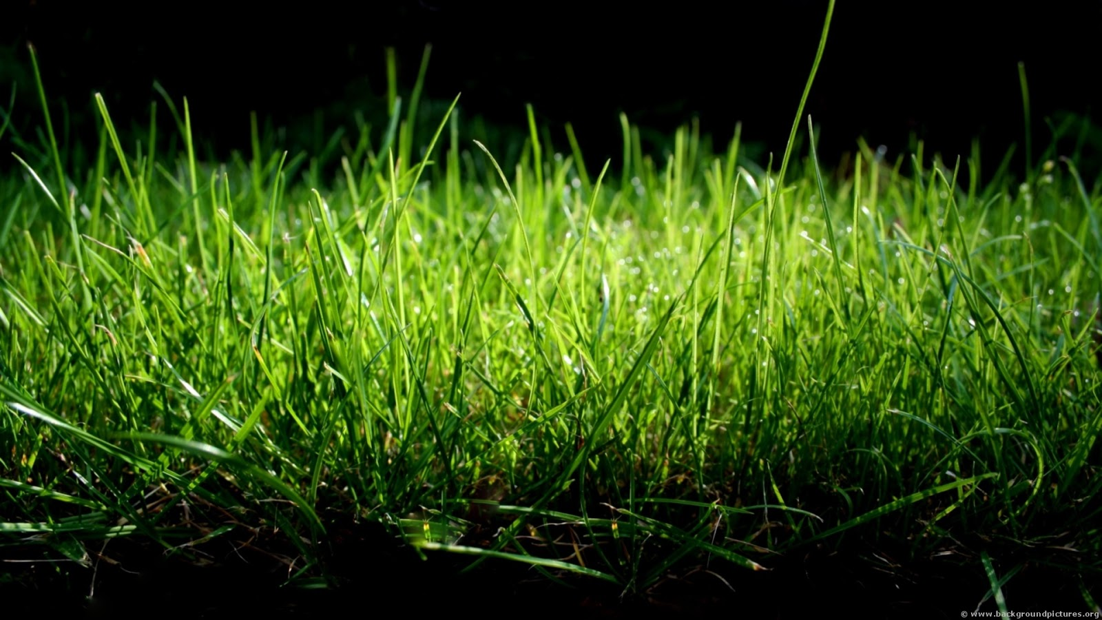 how to grow your lawn green