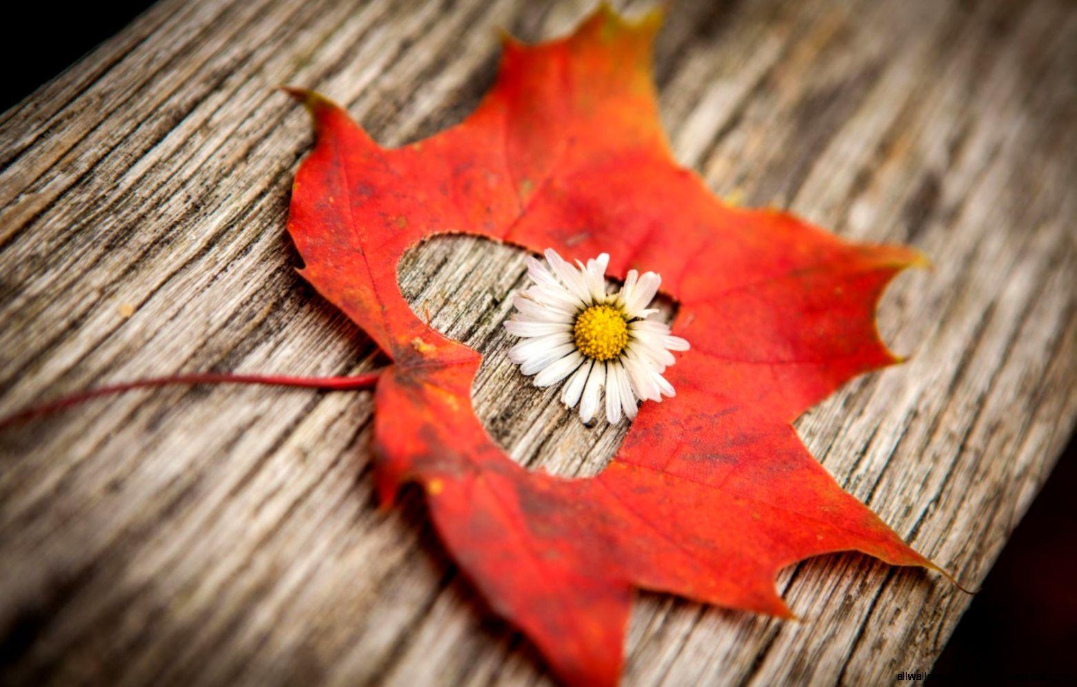 Woman love Flower 6961887