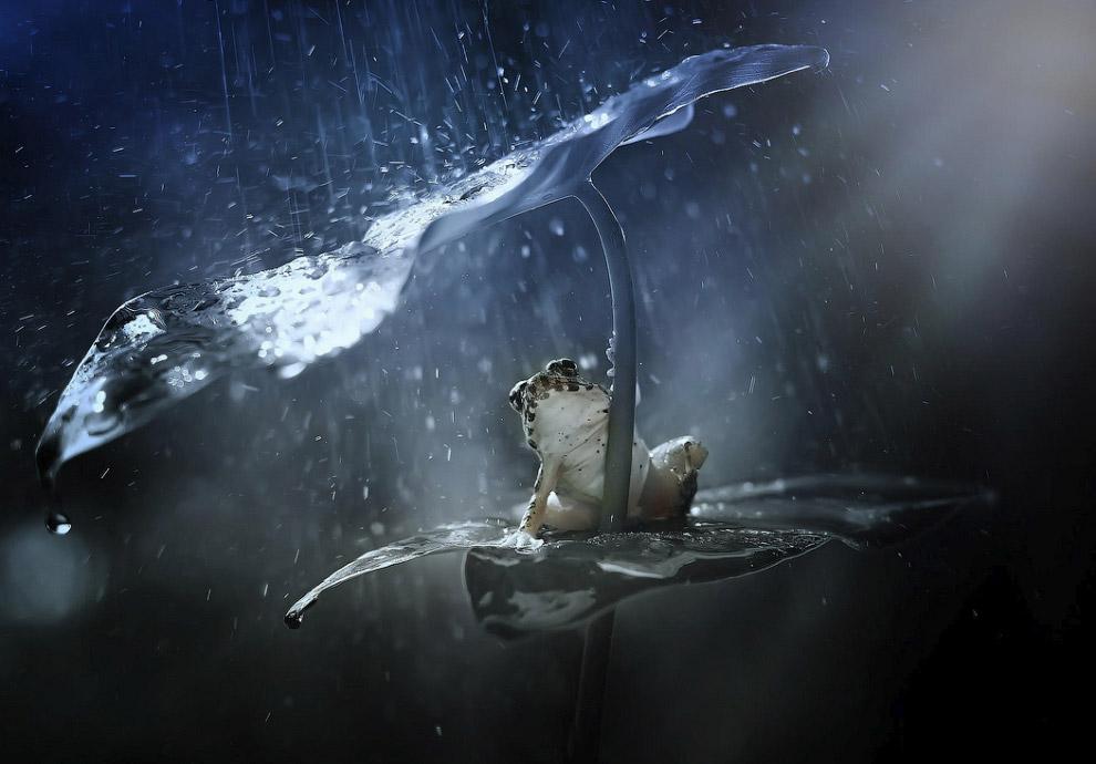 Как животные прячутся от дождя (13 фото)