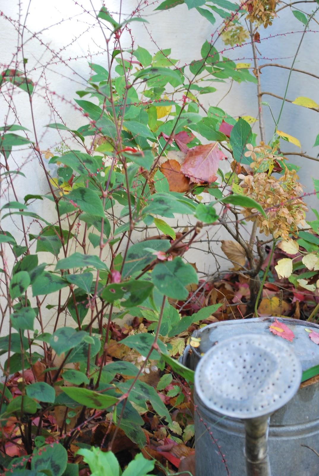 Lavori d autunno in giardino giardino metropolitano - Lavori in giardino ...