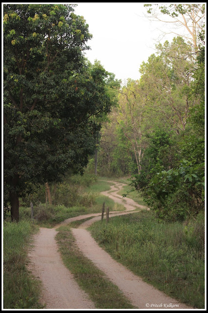 Road to Kisli zone, Kanha National Park