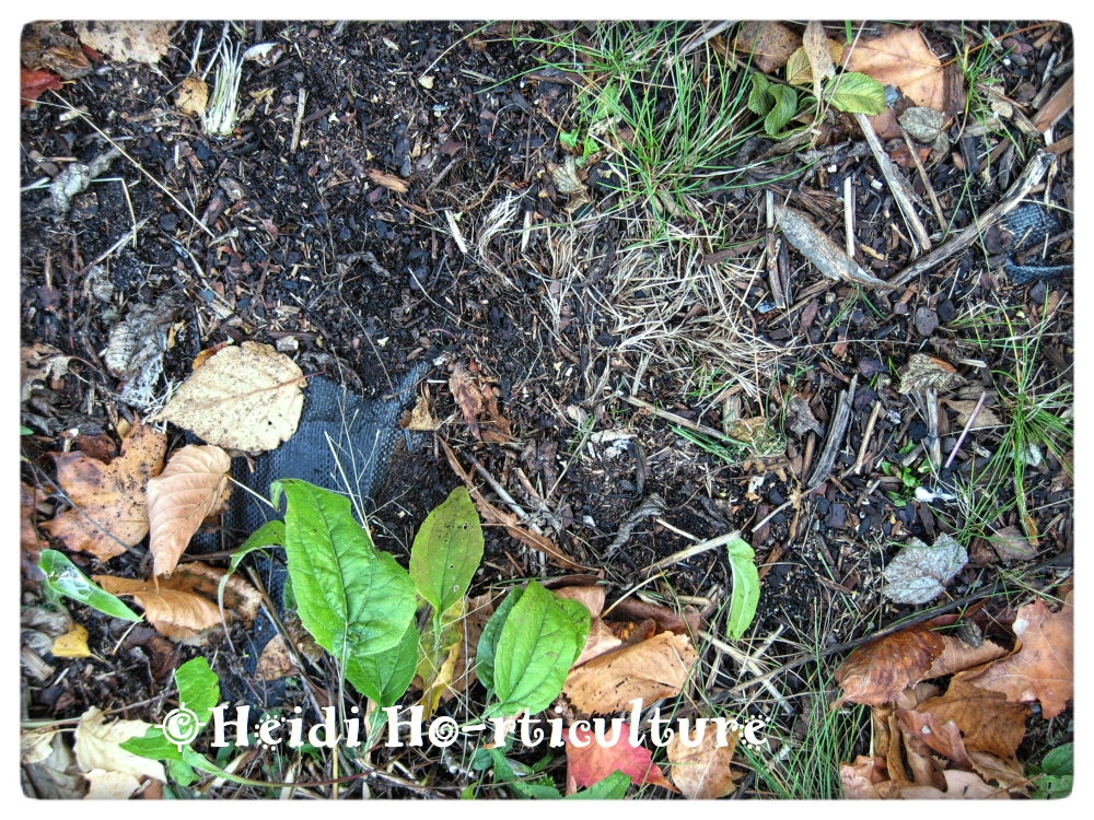 Landscaping Mulch Fabric : Heidi horticulture why i hate landscape fabric