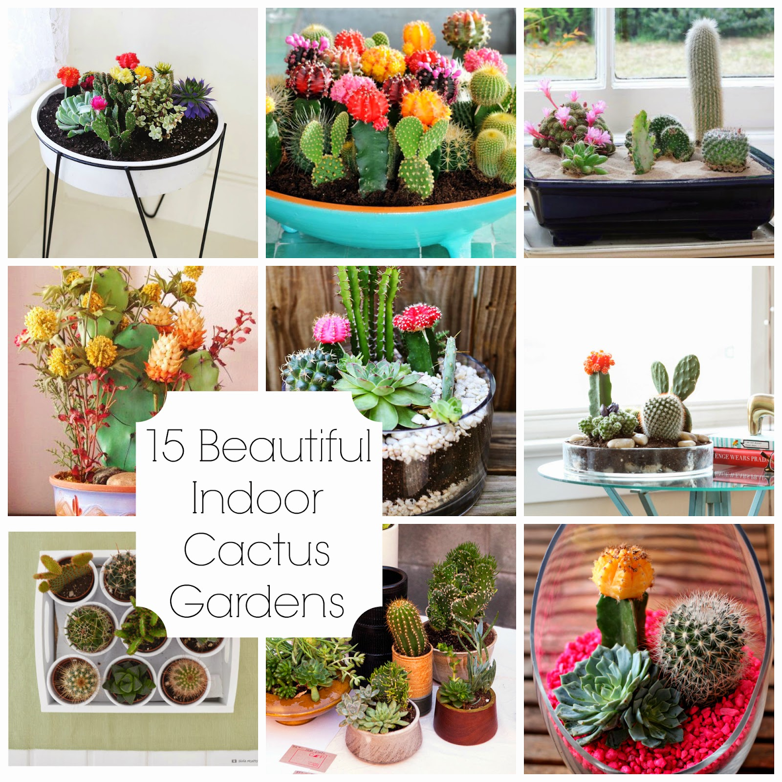 15 Beautiful Indoor Cactus Gardens