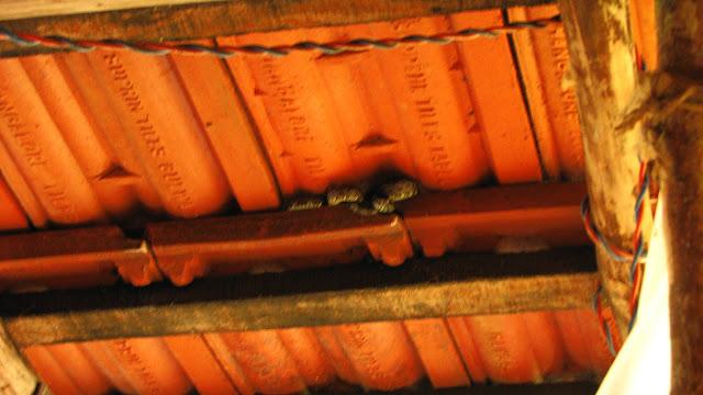 Pit viper in ARRS
