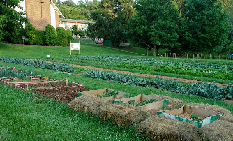 Natural Gardening May 2011