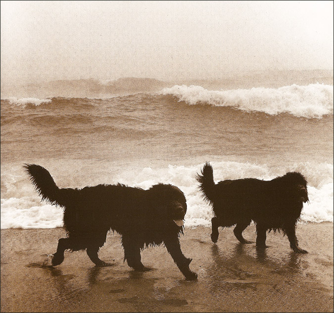 Notes from the Pack - a dog blog. Dogs on the beach, from 'If You Only Knew How Much I Smell You' by Valerie Shaff & Roy Blount Jr.