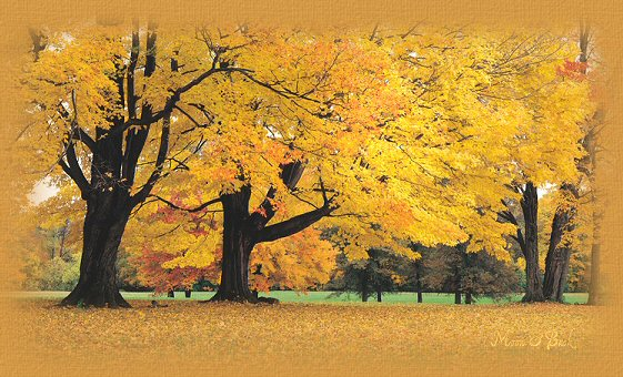 Autumn Blessings6