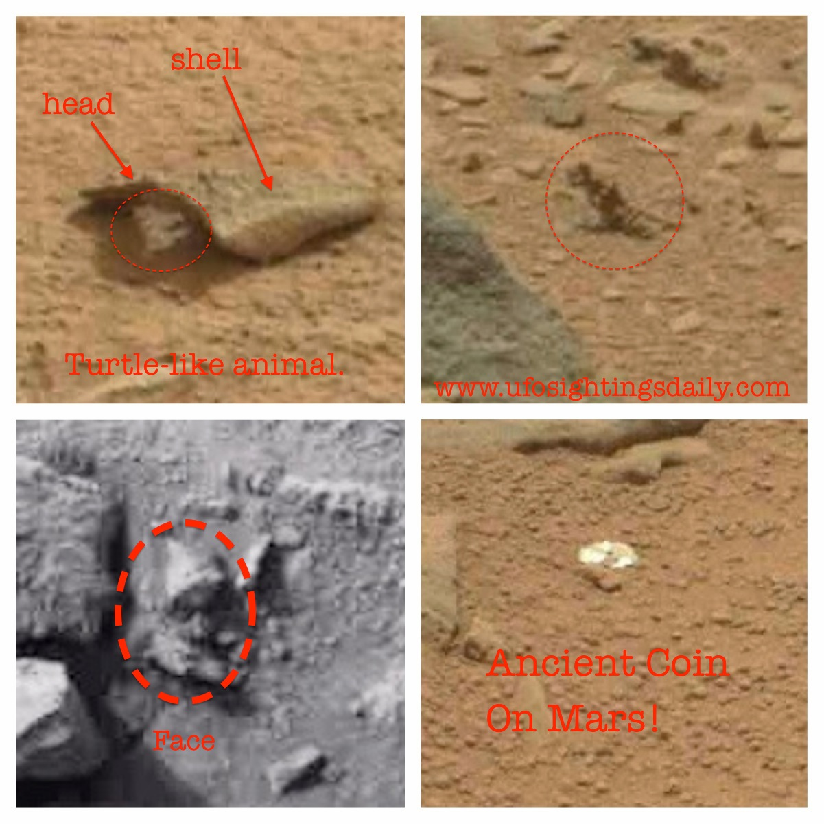 mars rover finds animal - photo #23