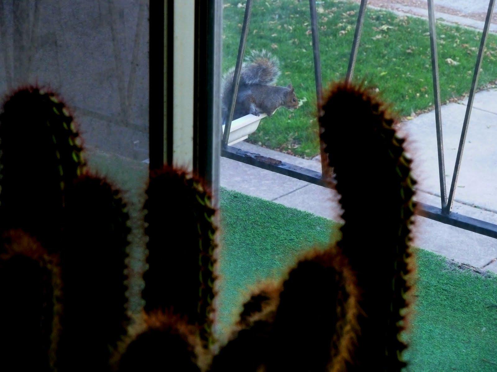 http://3.bp.blogspot.com/-rNNr-RaaMjY/UGFbVFBbpiI/AAAAAAAADhA/qbSbBeMyRnk/s1600/cactus_squirrel2.jpg