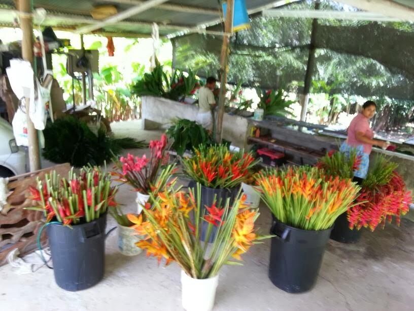 La floresta tropical cosecha y poscosecha de flores for Vivero plantas tropicales