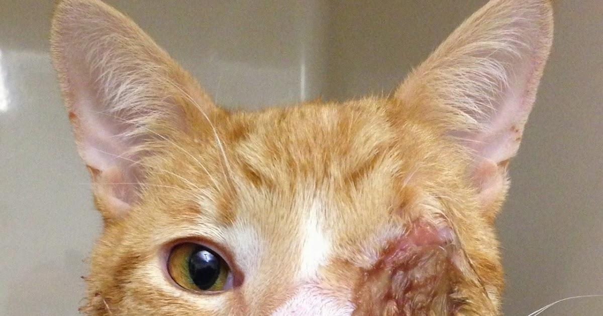 Cat Always Has A Runny Eye
