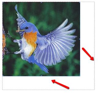 كيف تحول الصوره إلى نص ؟