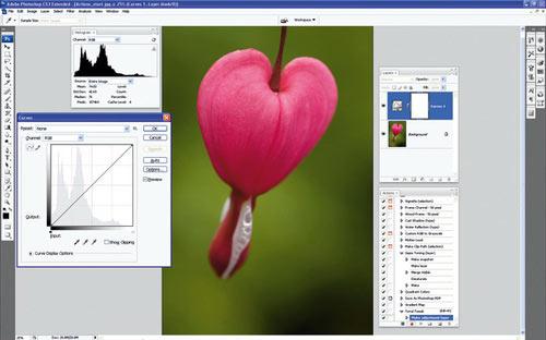 Thủ thuật Photoshop: Cách xử lý ảnh hàng loạt nhanh và đẹp