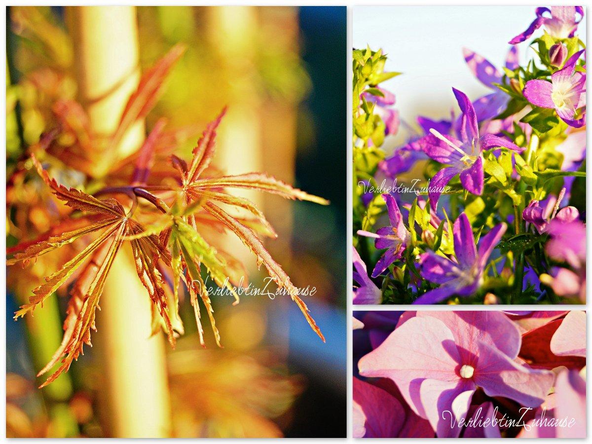 Fotocollage mit Makro von japanischem Ahorn - Glockenblume (Campanula) - Hortensie