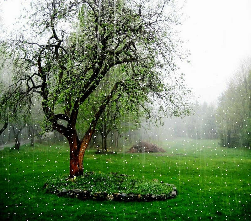 Hot Babes Single Rain Hd Nature Wallpapers 2012 2013