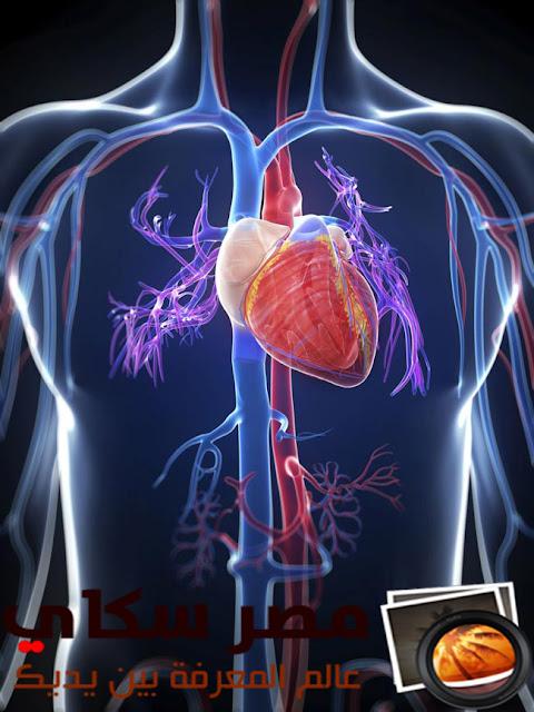 القلب ومما يتكون والوصف التشريحى له The heart