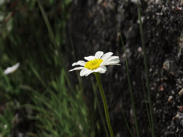 Va de flores