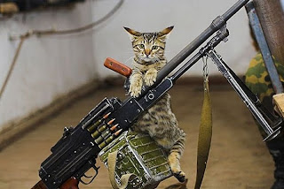 http://3.bp.blogspot.com/-rOk3uNkuoBA/Taznh41hlxI/AAAAAAAAAko/o4J4zfCyiTM/s320/2241-cat-army.jpg