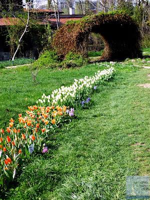 alee flori gradina botanica bucuresti