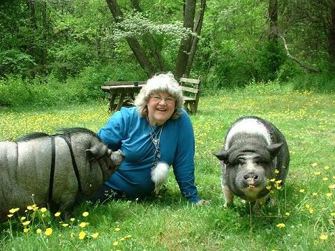 Potbellied Pigs Leave Hoof Prints On Your Heart