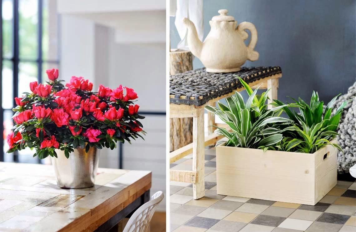 El blog de los pe otes plantas de interior resistentes - Plantas de interior para salon ...