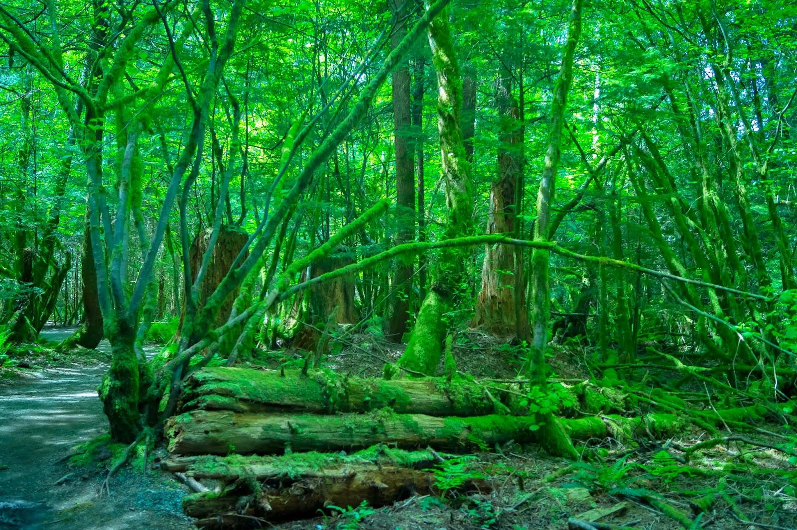 дождевой лес