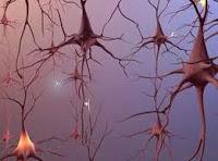 Dẫn truyền xung thần kinh