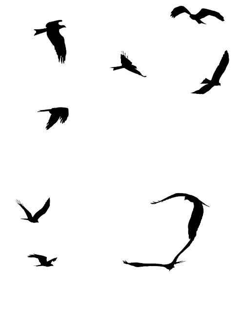 silhouttes of sea gulls in different flying positions