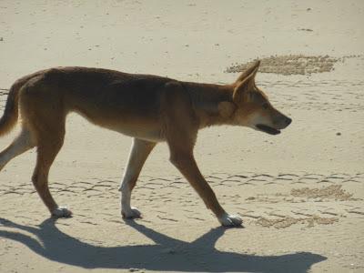 Fraser Island a World Heritage Site, and Rainbow Beach adventures