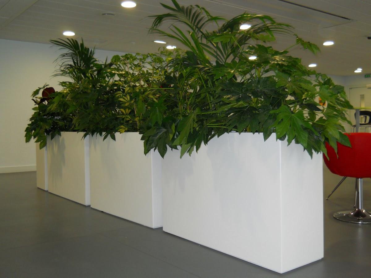 INDOOR - IMAGE\'IN flowers pots are installing inside !