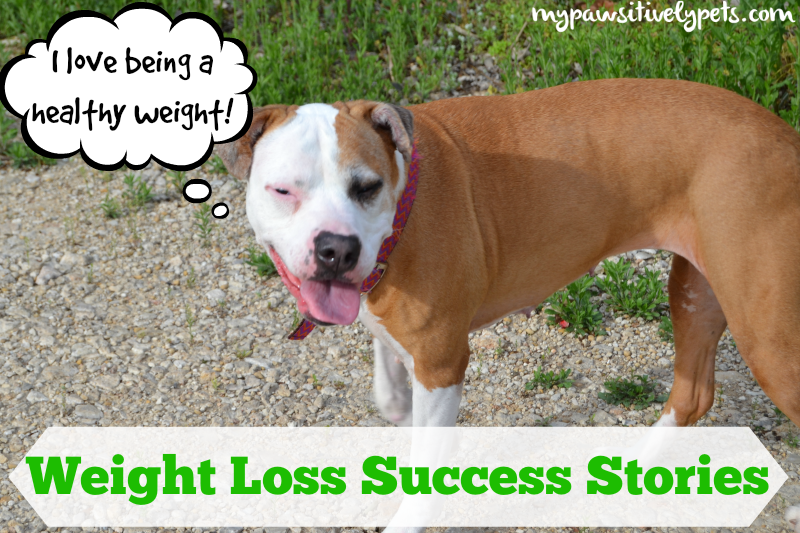 #HillsPet Weight Loss Success Stories