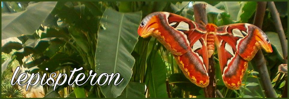 Cría e identificación de mariposas (lepidoptera)