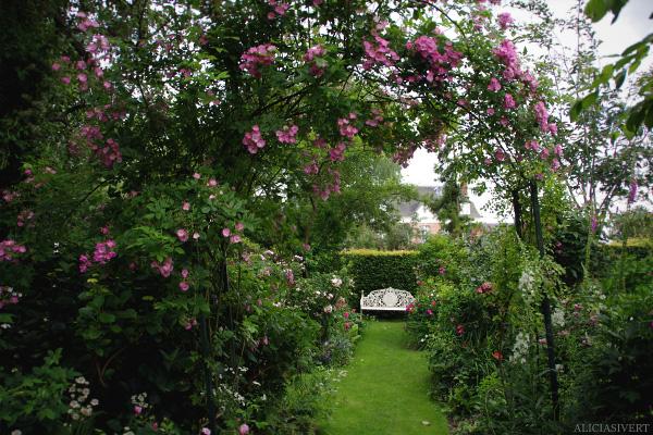 aliciasivert, alicia sivertsson, Les Jardins d'Angelique, normandie, normandy, france, frankrike, trädgård, trädgårdar, garden, gardens, rose, roses, flowers, gardening, flower, blommor, trädgårdskonst, växtlighet, rosor, bänk, bench