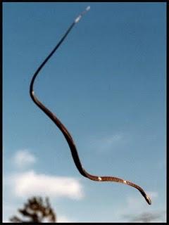 Arabhar, hewan purbakala yang pernah hidup di bumi