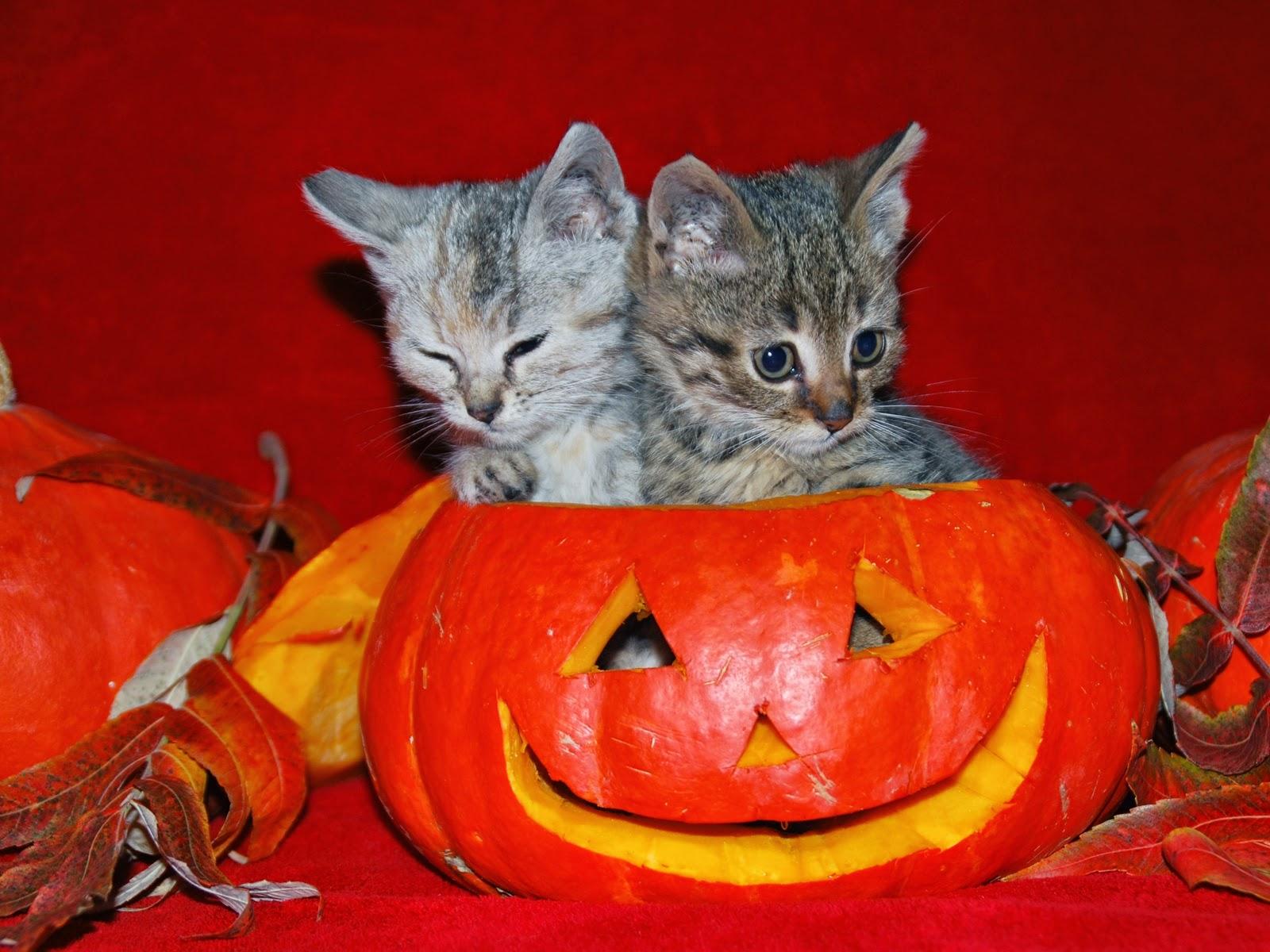 Funny halloween animals 15