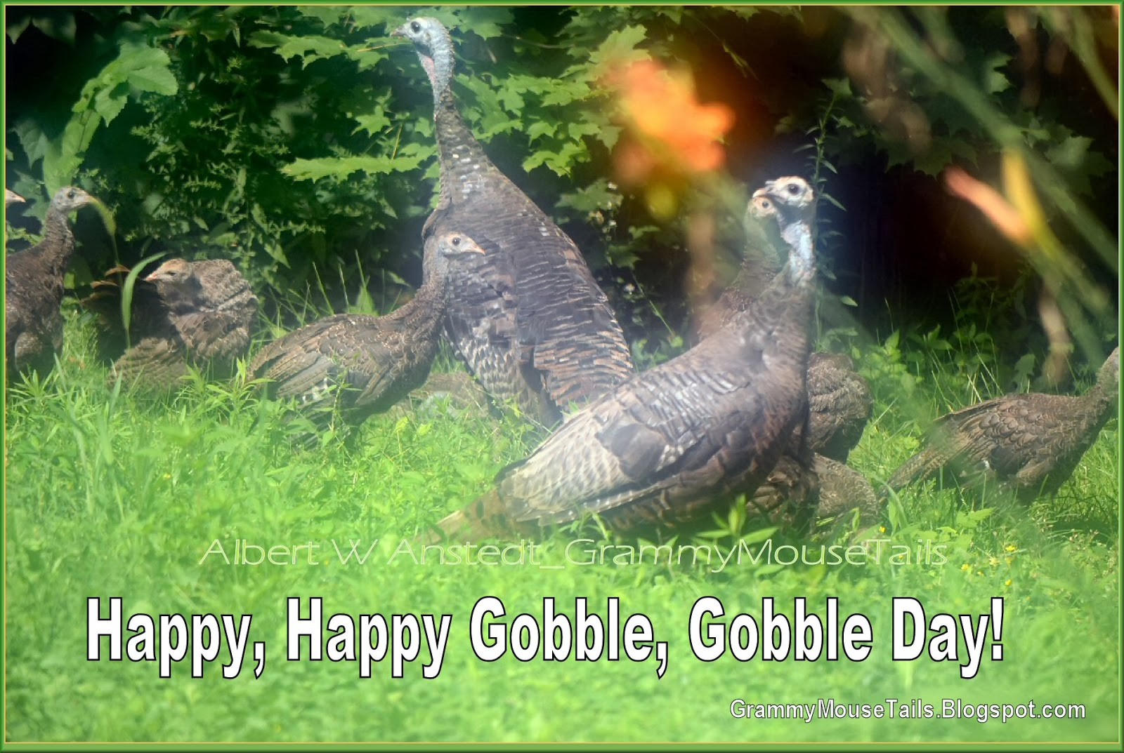 wild turkeys send thanksgiving wishes happy for life photo image