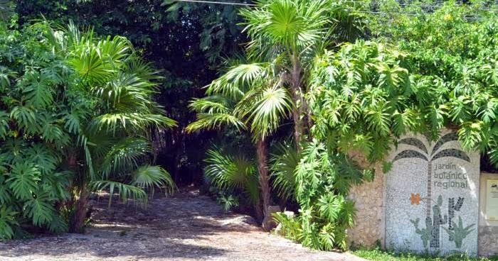 Tendencias m xico yucat n tiene el acervo de flora m s for El jardin de l abadessa