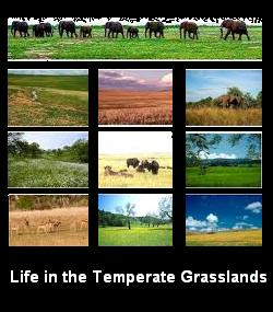temperate grassland physical features