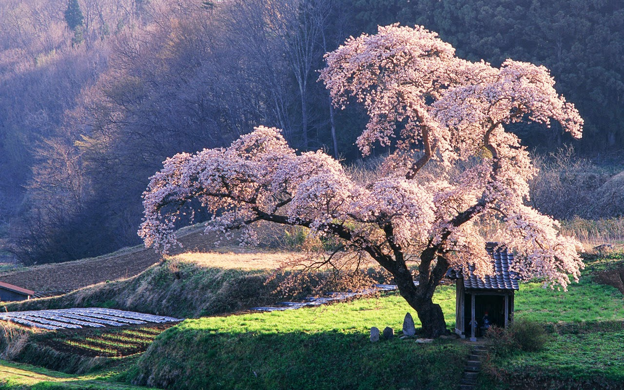 Royalty Free Stock Images Senary Japan One The Most Beautiful Places World Its Xpx