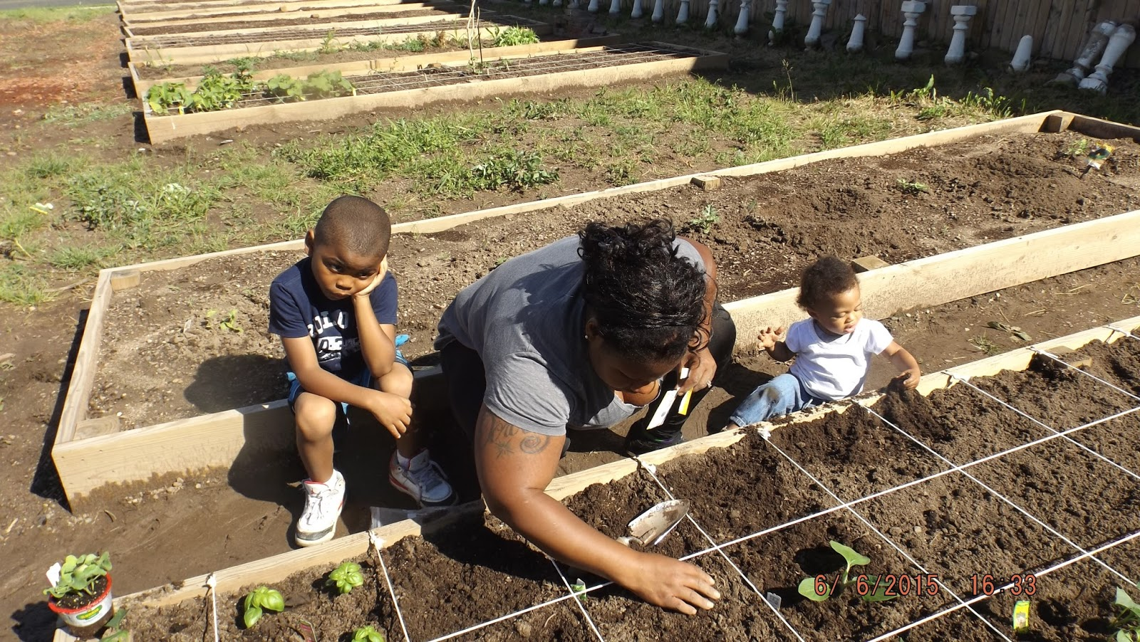 Grow Your Own: Suburban Gardening: Cub Scout Troop 171 & The Square ...