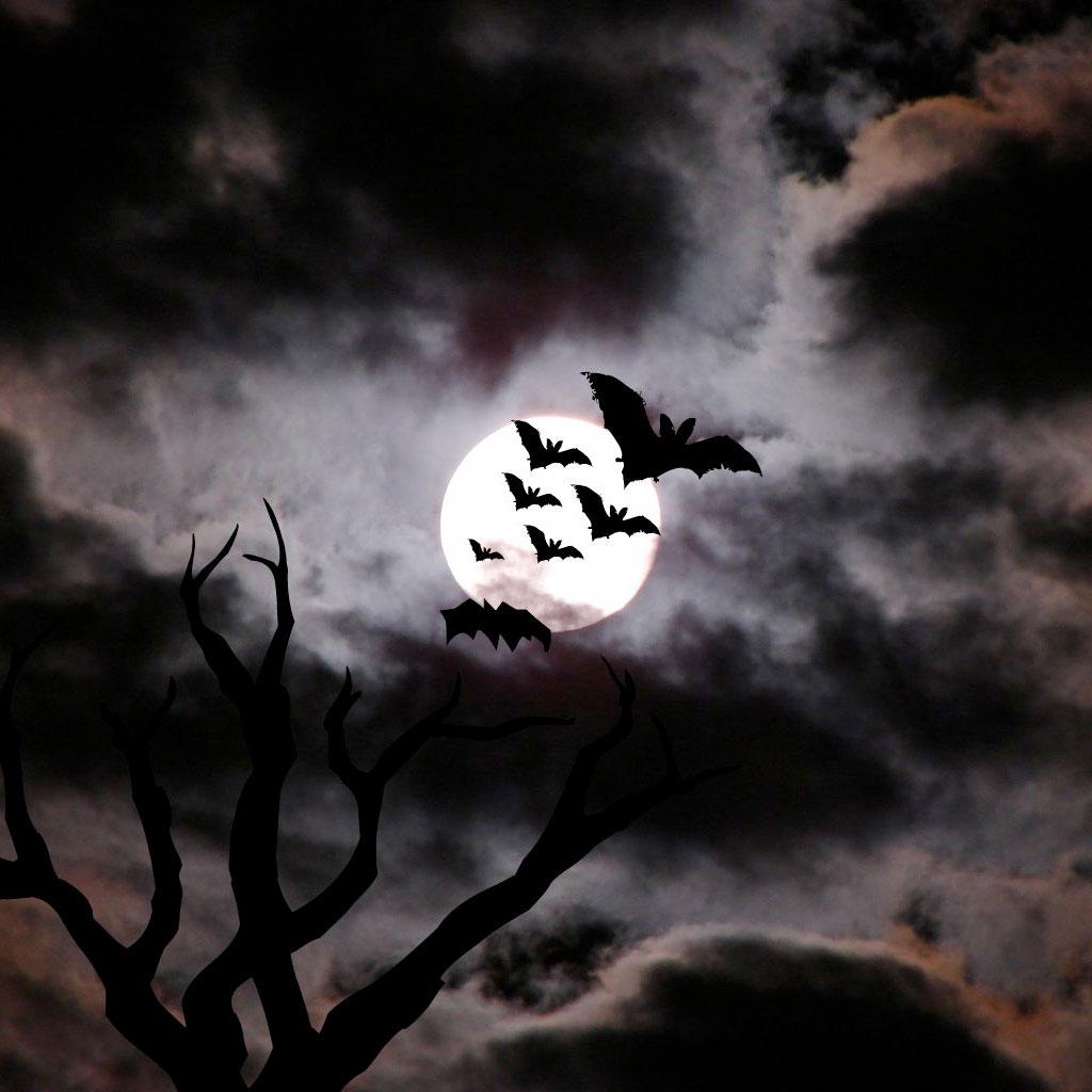 http://3.bp.blogspot.com/-rS5hH0fq9KE/TnmuwHr3_oI/AAAAAAAAEww/HYSCvgQJTyk/s1600/Halloween%2BWallpaper%2BiPad%2BTablet%2BPC%2B%25281%2529.jpeg