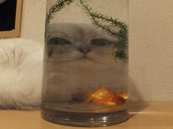 Funny cats - part 73 (35 pics + 10 gifs), funny cat, cat pics