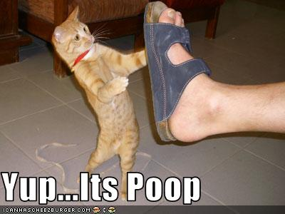 There S Cat Poop In My Shoe