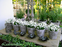 Fotos meines Gartens