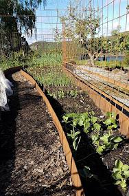 I grönsakslandet