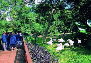 Parque Das Aves, Brasil, Visitar, Excursión, Realizar, Turismo